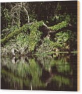 Weeki Wachee Springs Wood Print
