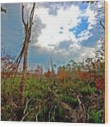 Weeks Bay Swamp Wood Print