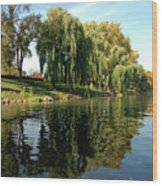 Weepin Willows Frankenmuth Cass River Wood Print