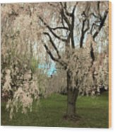 Weeping Asian Cherry Wood Print