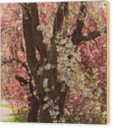 Weeping Cherry Panel Wood Print