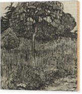 Weeping Tree Wood Print