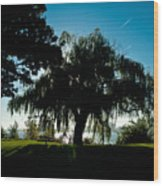 Weeping Willow Silhouette Wood Print