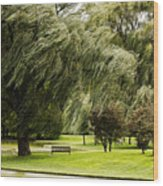 Weeping Willow Trees On Windy Day Wood Print