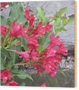 Weigela Florida Red Prince Wood Print