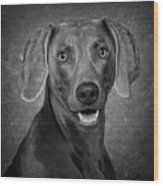Weimaraner In Black And White Wood Print