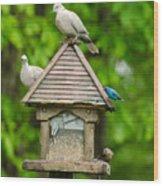 Welcome To My Bird Feeder Wood Print