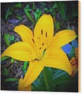 Welcoming Lily Wood Print