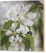 Welcoming Spring Wood Print