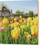 Welkom To Holland Wood Print