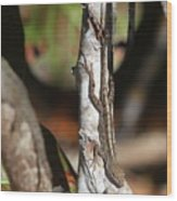 Well-camouflaged Lizard Wood Print
