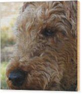 Welsh Lancelet Wood Print