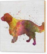 Welsh Springer Spaniel In Watercolor Wood Print