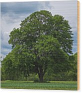 Wenham Ma Farm Tree Tender Crop Farm Wood Print