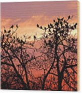 Wente Road Sunset Wood Print