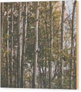 Werifesteria Wood Print