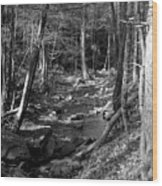 Wesser Creek Trail Wood Print