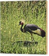 West African Crowned Crane Wood Print