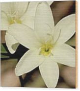 West Australian Wildflowers - Orchid 2 Wood Print