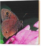 West Indian Buckeye Wood Print