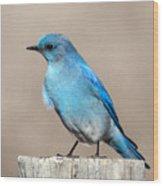 Mountain  Bluebird Wood Print