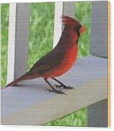 Western Cardinal Wood Print