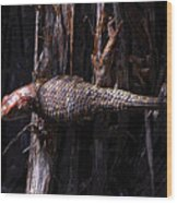 Western Fence Lizard Wood Print