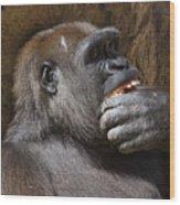Western Gorilla, Gladys Porter Zoo, Brownsville, Texas Wood Print