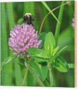 Western Honey Bee On Clover Flower Wood Print