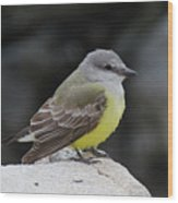 Western Kingbird Wood Print