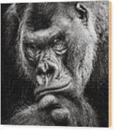 Western Lowland Gorilla Bw II Wood Print