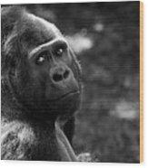 Western Lowland Gorilla Closeup Wood Print