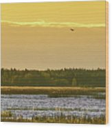 Western Marsh Harrier At Puurijarvi Wood Print