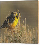 Western Meadowlark At Dawn Wood Print