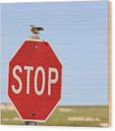 Western Meadowlark Singing On Top Of A Stop Sign Wood Print