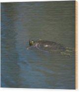 Western Painted Turtle Wood Print