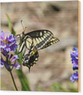 Western Tiger Swallowtail Wood Print