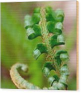Western Swordfern Three Wood Print