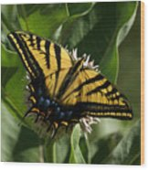 Western Tiger Swallowtail 2 Wood Print