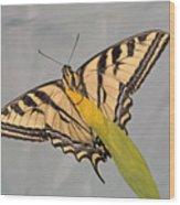 Western Tiger Swallowtail Wood Print