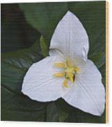 Wildflowers Western Trillium Oregon 1 Wood Print