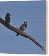 Western Woodpeckers Wood Print