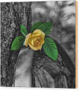 Western Yellow Rose Two Tone Wood Print