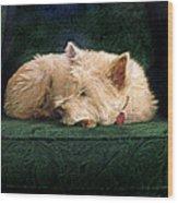 Westie Nap Wood Print