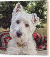 Westie Puppy With Christmas Tree Shower Curtain