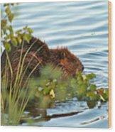 Wet Beaver Wood Print
