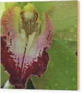 Wet Bloom Wood Print