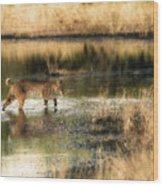 Wet Bob Cat  Wood Print