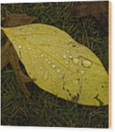 Wet Fallen Leaf Wood Print