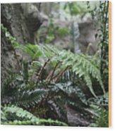 Wet Ferns Wood Print